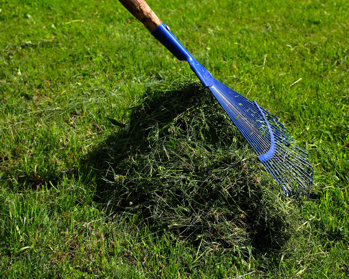 Dispose of grass clippings