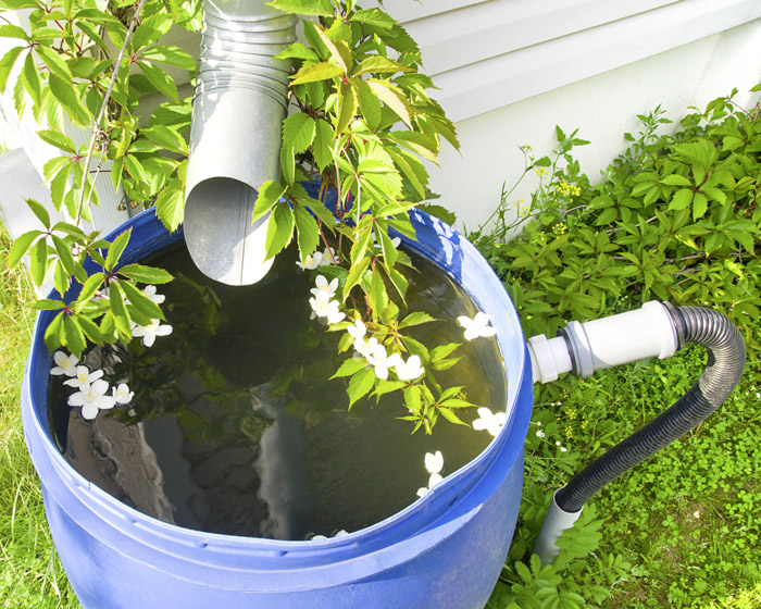 Collect rainwater in barrels